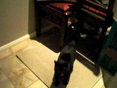 katzenklappe petsafe microchip petporte f r gechipte katzen von petsafe g nstig bestellen. Black Bedroom Furniture Sets. Home Design Ideas