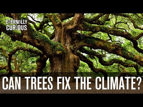 Can we plant enough trees to fix climate change? | Eternally Curious #3