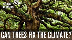 Can we plant enough trees to fix climate change?   Eternally Curious #3