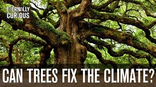 can we plant enough trees to fix climate change? eternally curious 3