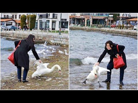Ради фото она вытащила лебедя из озера. Последствия просто ужасны