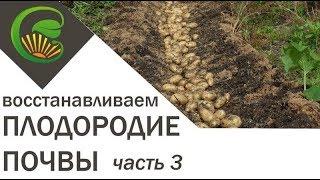 Как я сделала почву плодородной. Часть 3.