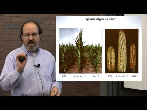 Corn and Cows: the genetics and genomics of agriculture (October 13, 2015)