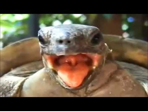 Turtle Sex - Funny Funny Funny turtle making weird noises.. from YouTube · Duration:  1 minutes 29 seconds