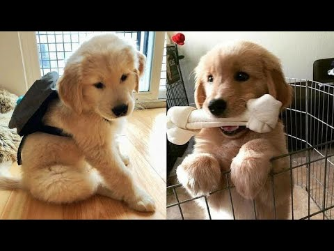 ❤️Cute Puppies Doing Funny Things 2020❤️Cutest Dog Videos 2