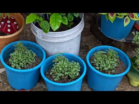 monsoon-problems-/how-i-solve-my-garden-problems...