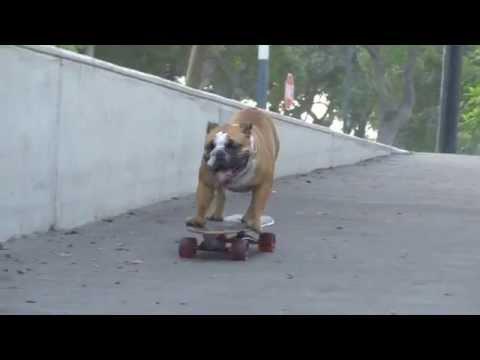Biuf Bulldog Skater's 1st Birthday skate