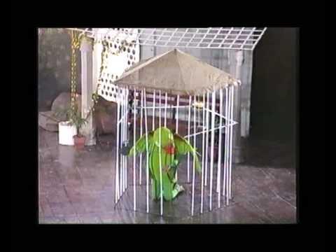 Iqbal: Parinday ki Faryad (Tleau) - اقبال:پرندے کی فریاد ٹیبلو