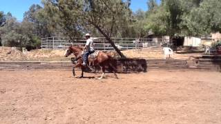 aqha mare for sale reining ranch riding