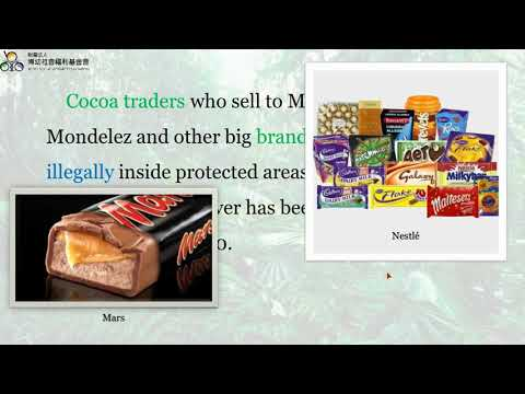 Chocolate industry drives rainforest disaster in Ivory Coast