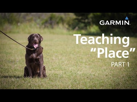 "e-collar-training-with-garmin:-teaching-""place,""-part-1"