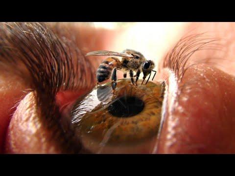 Вопрос: Какие вещи пропадут навсегда, если исчезнут… пчелы?