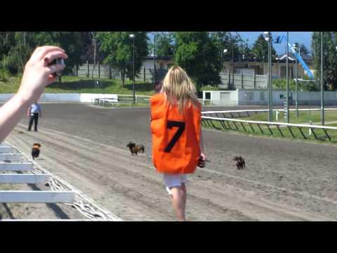 Wiener Dog Race – Fail!