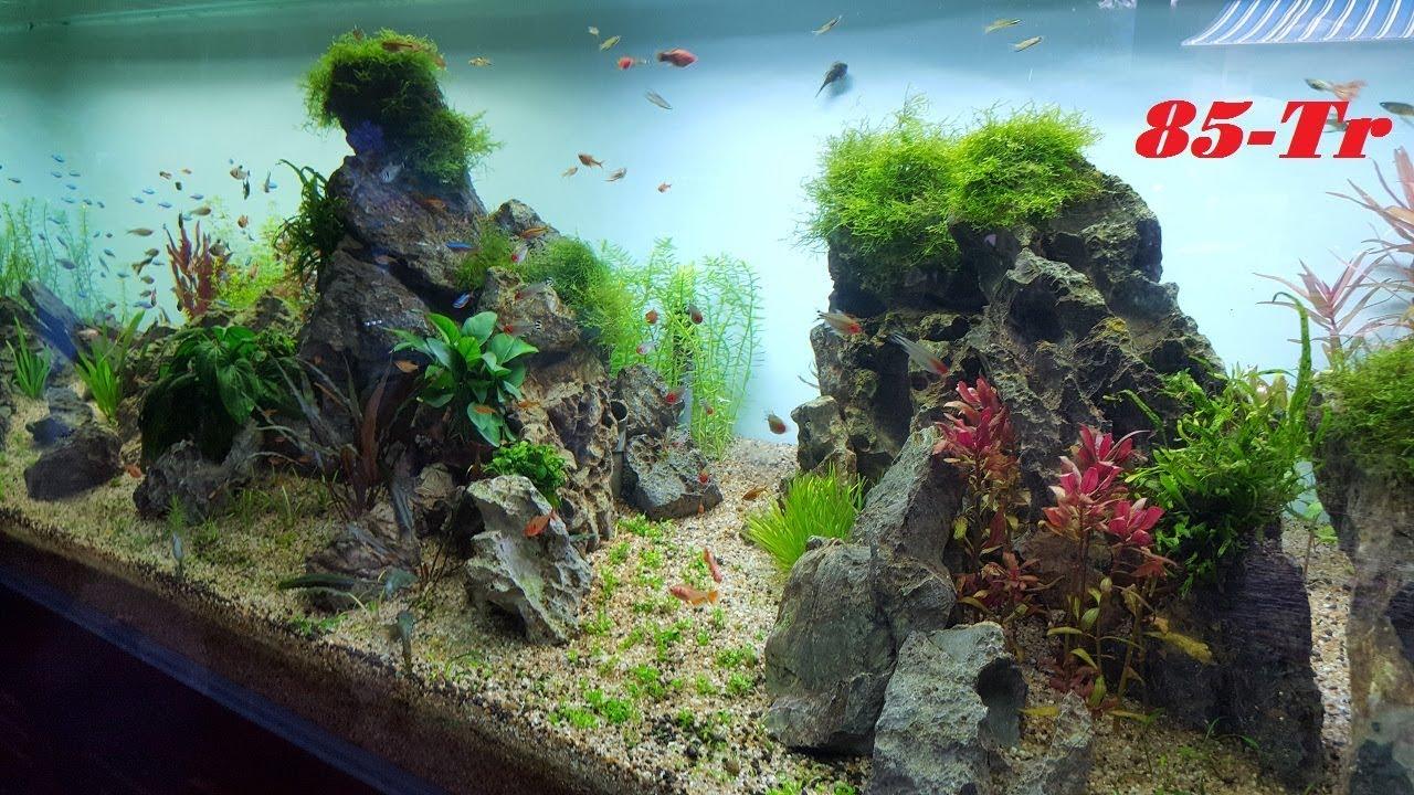 Bể cá cảnh thủy sinh siêu khủng siêu đẹp đắt nhất Việt Nam