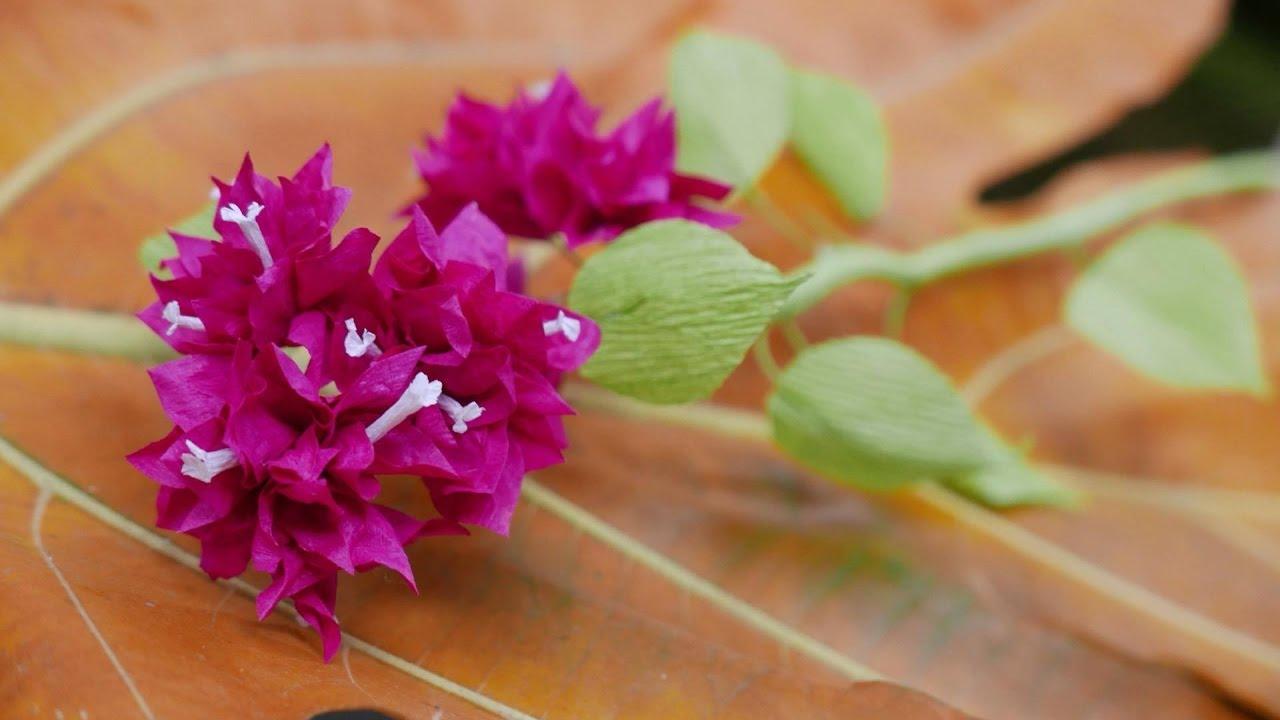 Diy how to make bougainvillea flower by crepe paper lm hoa giy diy how to make bougainvillea flower by crepe paper lm hoa giy bng giy nhn mightylinksfo