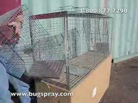 Live Bait Cage Setup