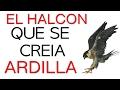 Motivacion Personal | Superacion y Motivacion en Español - Autoestima El Halcon Libros