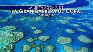 LA GRAN BARRERA DE CORAL- Un milagro de la naturaleza-HD-1/3