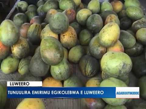 Luweero: Tunuulira emirimu egikolebwa e Luweero.