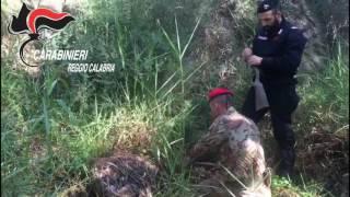 Focus 'ndrangheta nella Locride