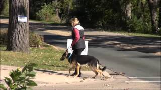 Howie (german Shepherd Dog) Boot Camp Dog Training Video