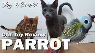 貓與鸚鵡可愛的貓喜樂俄羅斯藍色和孟加拉小鹿斑比고양이조이、,