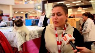 U news. Герои Интернета. Самые редкие кошки в Стерлитамаке.