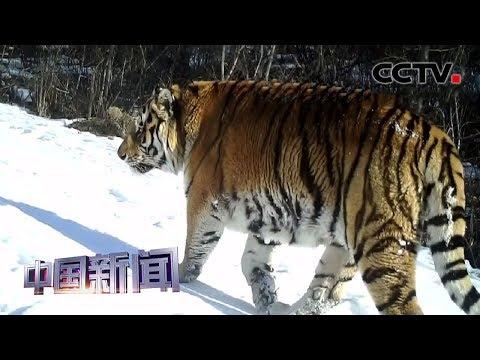 [中国新闻] 黑龙江鹤岗: