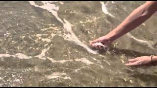 Captura y suelta de rene ( Amigos De La Pesca Bcn )