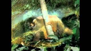 Mitos y Verdades Sobre el Amazonas