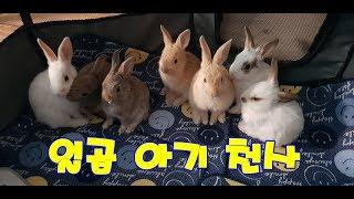 (감동) 어미 토끼의 모성애 - 눈물겨운 아기 수유 장…