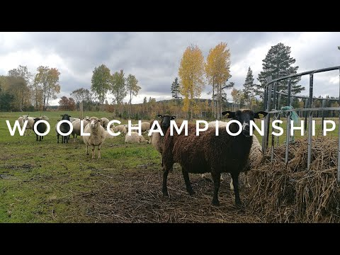 KNITTING VLOG: Swedish wool Championship in Dalarna