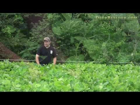 How to grow an incredible Soybean Food Plot