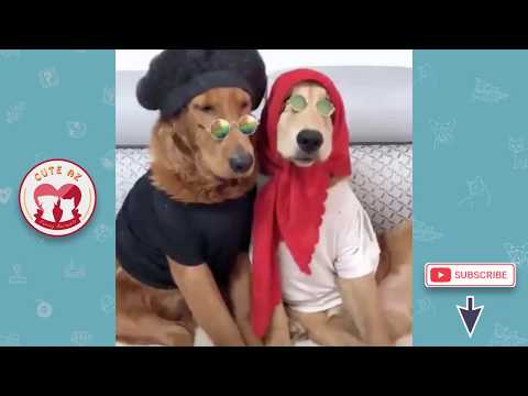 Tik Tok Cat, Dog, Animals: Funny Cute Pets Videos Compilation #20