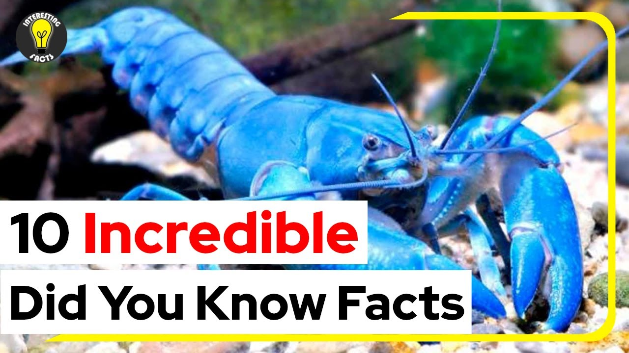10 Incredible   Did You Know Facts   That Will Astonish You