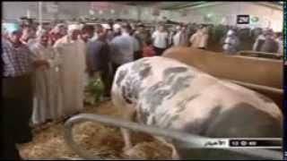 Repeat youtube video akbar 3ajal fi l3alam