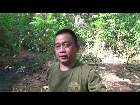 "Wild Boar ""Pig"" Primitive Trap ""JEST Camp"" - Subic Bay Philippines"