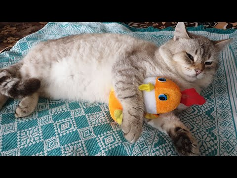 #cats#funny#fannycatvideos-قطي-في-اوكرانيا