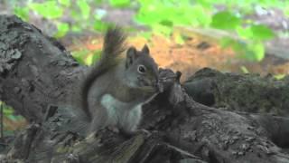 Cute Squirrel is eating Dinner & goes to Sleep