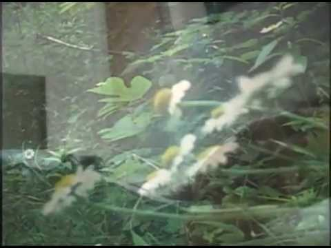sparklehorse-morning-hollow-official-video-sparklehorsevideos