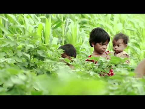 UNICEF BT Cotton - Documentary on Child Labour