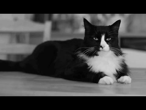 Au Revoir, Internet Cat Video Festival