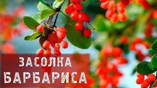 ФАЗЕНДА - 2013.12.08 - Фрагмент 54.