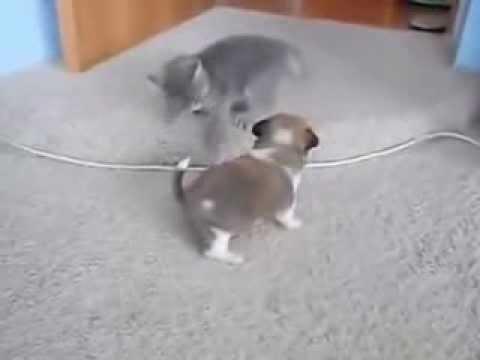 Видео как котята поют