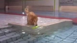プールで泳ぐことや飛び込みも大好きですが、前足でおもちゃを引き寄せ...
