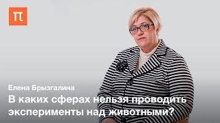 Эксперименты над животными — Елена Брызгалина