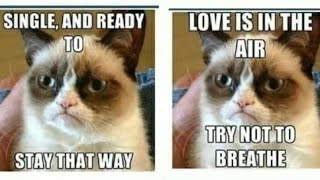 Grumpy cat memes only..... plz