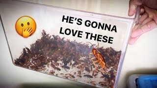 Sending someone a WHOLE BUNCH of COCKROACHes !!!