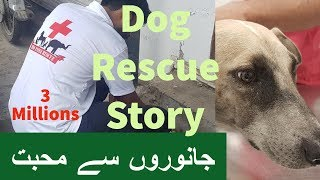 Heart warming Dog Rescue story
