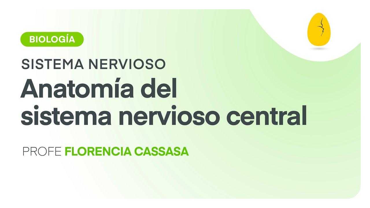 Anatomía del sistema nervioso central | Biología | Sistema Nervioso ...